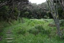 Waldweg hinauf zum East  Cape