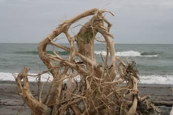 Fundstücke am Strand von Hokitika