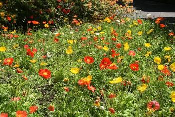 Blütenpracht im Queens Park in Invercargill