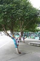 »Knitting« an den Bäumen in der City von Nelson