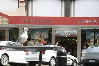Zaungast bei einer gemütlichen Kaffeepause in einem Cafe in der Trafalger Street, Nelson