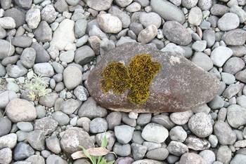 Moose sind genügsame Pflanzen am Lake Te Anau ...