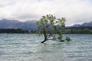 Mein Freund der Baum im Lake Wanaka