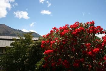 Herrliche Blütenpracht vor dem Hotel in Wanaka