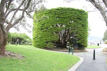 Botanische Garten Wellington